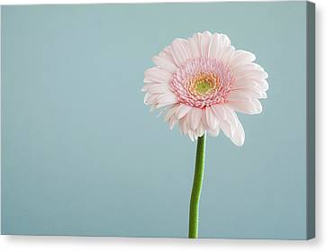 Mother Canvas Print - Simply Beautiful by Happy Home Artistry