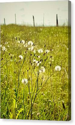 Simply Country Canvas Print
