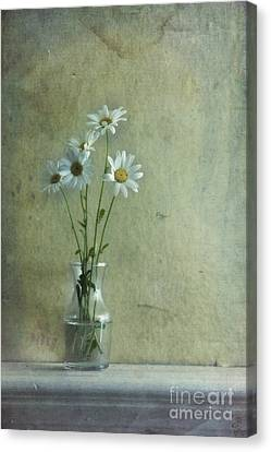 Glass Wall Canvas Print - Simply Daisies by Priska Wettstein