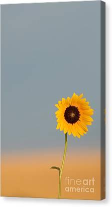Simply Kansas Canvas Print