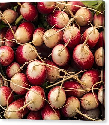 Simply Radishing Canvas Print by Peter Tellone