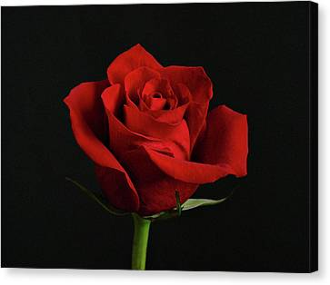 Simply Red Rose Canvas Print by Sandy Keeton
