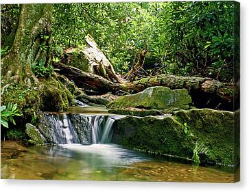 Sims Creek Waterfall Canvas Print