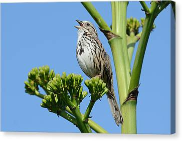 Canvas Print featuring the photograph Sing A Song by Fraida Gutovich