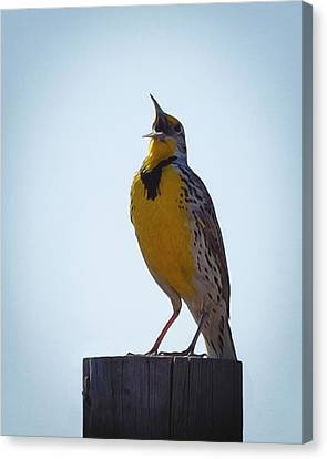 Meadowlark Canvas Print - Sing Me A Song by Ernie Echols