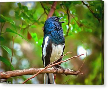 Singing Ceylonese Robin-magpie Canvas Print