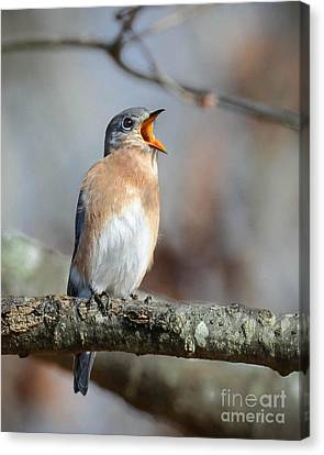 Singing This Song For You Canvas Print