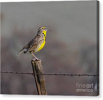 Canvas Print featuring the photograph Singing Warbler by Debby Pueschel
