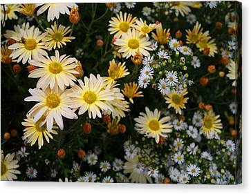 Canvas Print featuring the photograph Single Chrysanthemums by Kathryn Meyer