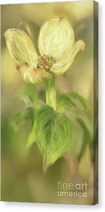 Canvas Print featuring the digital art Single Dogwood Blossom In Evening Light by Lois Bryan