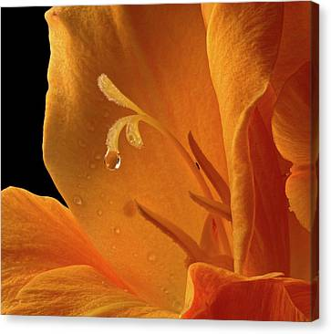 Canvas Print featuring the photograph Single Drop by Jean Noren