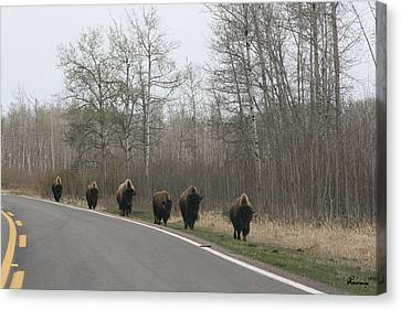 Single File Now Canvas Print by Andrea Lawrence