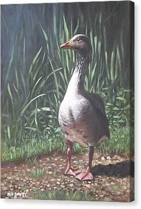 Single Goose Canvas Print by Martin Davey