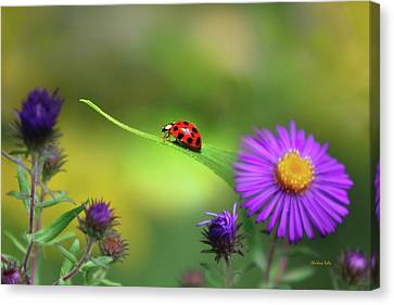 Beetle Canvas Print - Single In Search by Christina Rollo