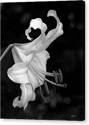 Single Lily In Black And White. Canvas Print