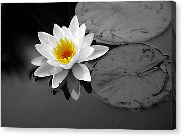 Canvas Print featuring the photograph Single Lily by Shari Jardina