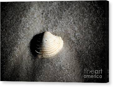 Single Orange White Sea Shell Macro On Fine Sand Fresco Digital Art Canvas Print by Shawn O'Brien