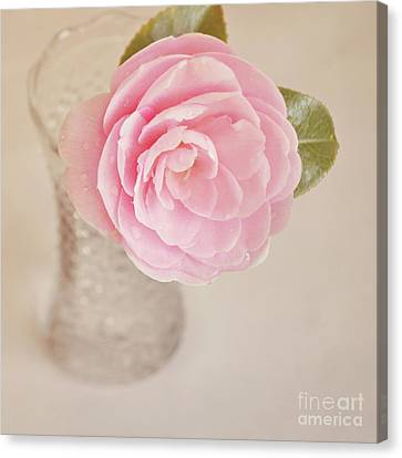 Canvas Print featuring the photograph Single Pink Camelia Flower In Clear Vase by Lyn Randle