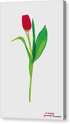 Single Red Tulip Canvas Print by James M Thomas