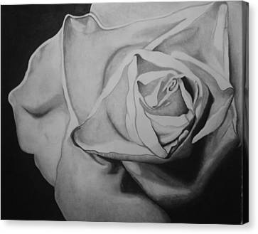 Single Rose Canvas Print by Jason Dunning