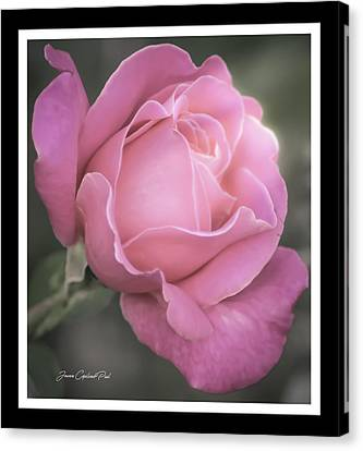 Single Stem Pink Rose Canvas Print