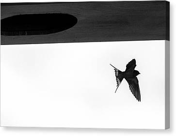 Single Swallow Flying Under Bridge Canvas Print by Dan Friend