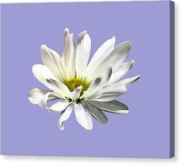 Gardens Canvas Print - Single White Daisy by Susan Savad