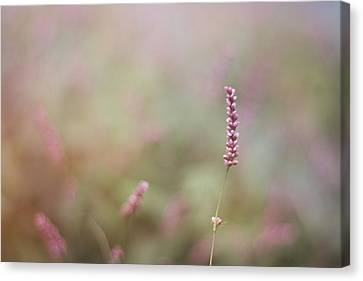Single Wild Flower Canvas Print