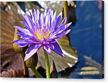 Singularly Purple Canvas Print