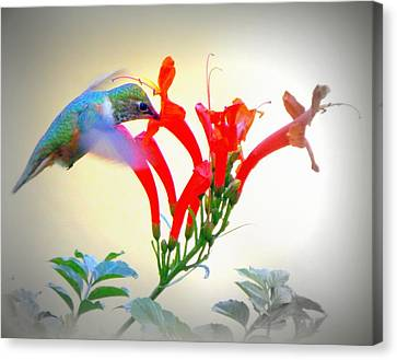 Sipping The Nectar Canvas Print