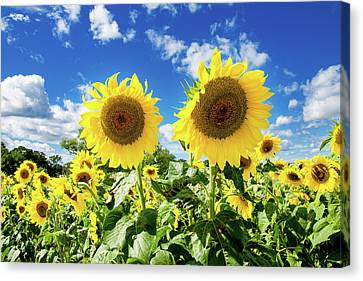 Sisters Canvas Print by Greg Fortier