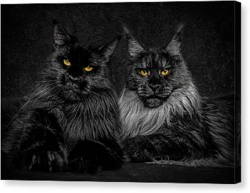 Canvas Print featuring the photograph Sisters by Robert Sijka