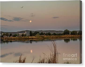 Sitting Moon Canvas Print by Robert Bales