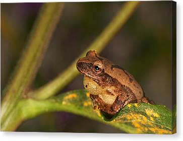 Sitting On The Edge Of A Leaf Canvas Print