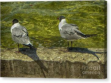 Sitting On The Seawall Canvas Print by Judy Hall-Folde