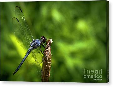 Canvas Print featuring the photograph Sitting Pretty 2 Dragonfly Art by Reid Callaway