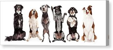 Six Dogs Standing Forward Together Begging Canvas Print by Susan Schmitz