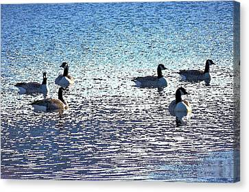 Six Canadian Geese Canvas Print by Kim Bemis