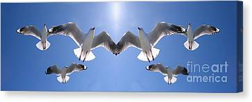 Six Heavenly Backlit Seagulls Flying Overhead In Blue Sky. Canvas Print by Geoff Childs