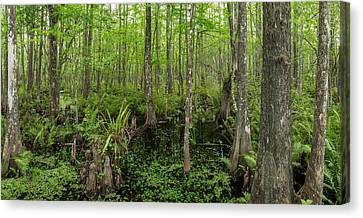 Six Mile Cypress Slough Preserve Canvas Print by Panoramic Images