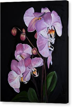 Six Orchids Canvas Print by Sandra Nardone