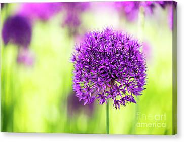 Sizzling Sensation Canvas Print by Tim Gainey