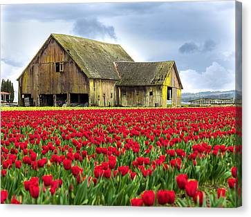 Skagit Valley Barn Canvas Print
