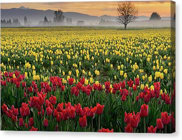 Canvas Print featuring the photograph Skagit Valley Misty Morning by Dan Mihai
