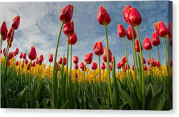 Canvas Print featuring the photograph Skagit Valley Spring Joy by Dan Mihai