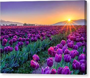 Northwest Canvas Print - Skagit Valley Sunrise by Kyle Wasielewski