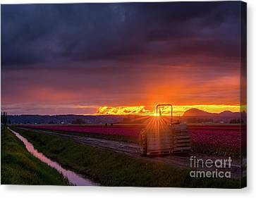 Canvas Print featuring the photograph Skagit Valley Tractor Sunstar by Mike Reid