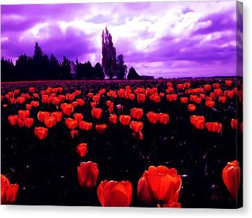 Skagit Valley Tulips Canvas Print by Eddie Eastwood
