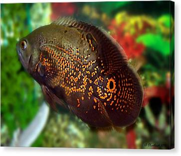 Canvas Print featuring the photograph Skeeter by Betty Northcutt