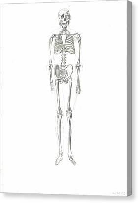 Skeleton Canvas Print by Joseph  Arico
